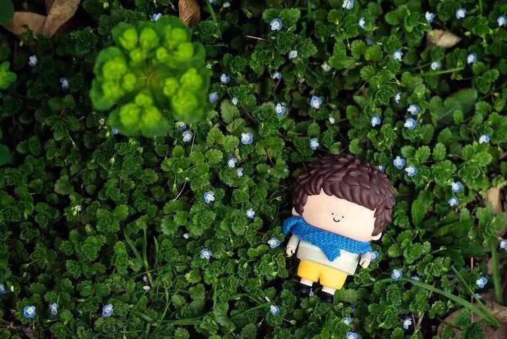 green-grass-little-boy-73242