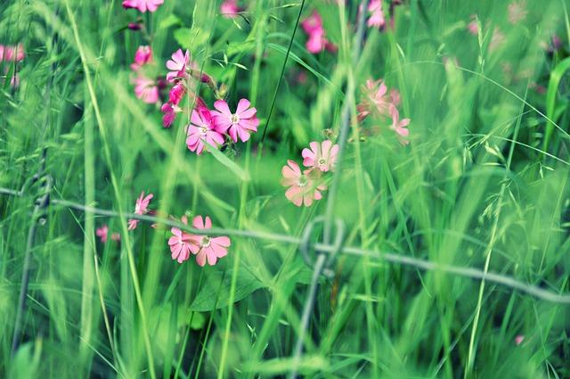 flower-1437460_640